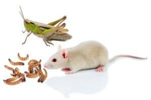 живые корма для рептилий