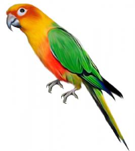 parrot-aratinga