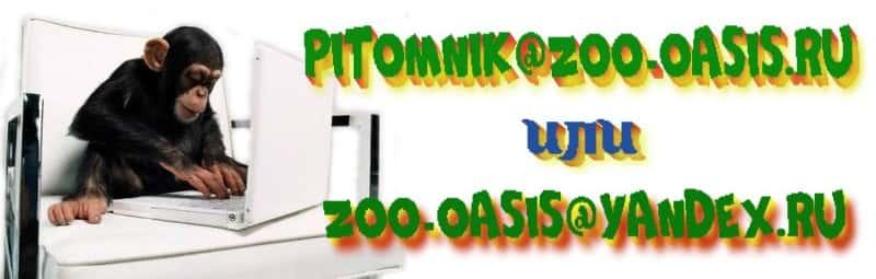 pochta_zoo-oasis