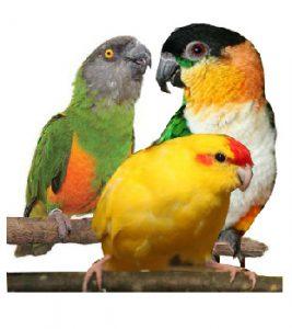 разные попугаи
