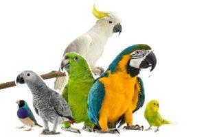 """попугаи """"зоо-оазис"""" разные виды"""