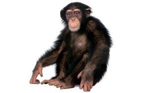 приматы разных видов от заводчика