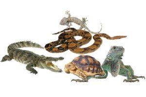 рептилии для дома