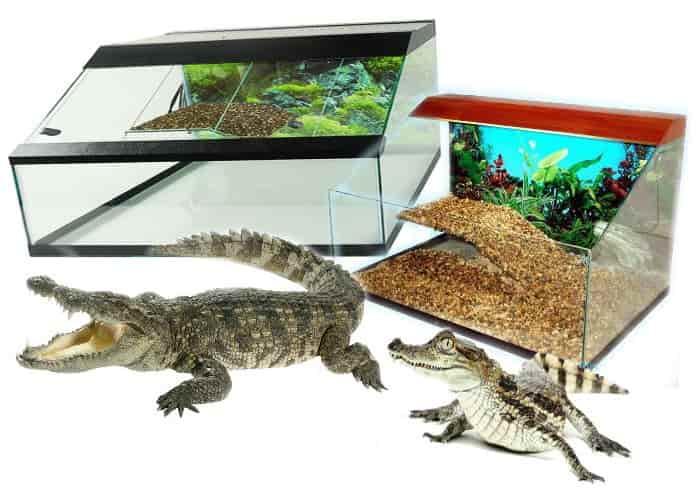 terrariumy-dly_krokodila