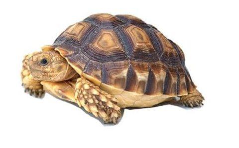 террариумы для сухопутной черепахи