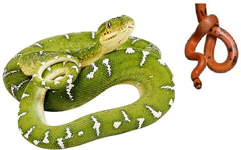 террариум для змей