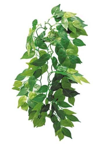 Фикус растение в террариум