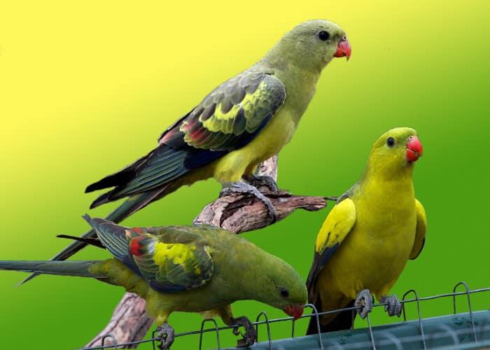Другие попугаи